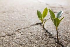 Расти засорителя Стоковая Фотография
