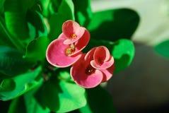застегните цветок Стоковое Фото