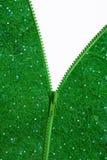 застежка-молния травы одежды Стоковые Фото