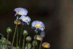 Застекленный заморозок на красивом цветке стоковое фото