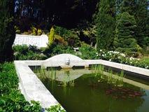 Застенчивый бассейн стоковое фото
