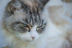 Застенчивый кот Стоковые Фотографии RF