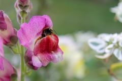 Застенчивый макрос пчелы Стоковое фото RF