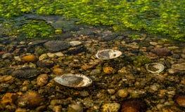 застойная вода Стоковые Изображения RF