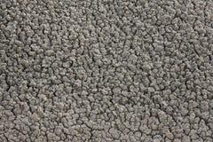 Засуха, засушливые почвы Стоковые Фото