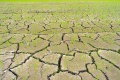 Засуха поля риса Стоковые Фото