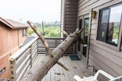Засуха причиняет мертвую сосну бака упасть на дом Стоковая Фотография RF