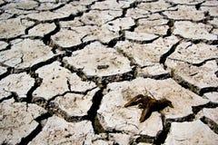 Засуха - река высушенное вверх с умерло глобальное потепление краба Стоковая Фотография