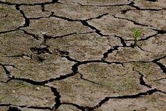 Засуха - река высушенный вверх-глобальный греть Стоковое фото RF
