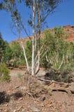 Засуха русла реки австралийского захолустья сухая Стоковые Фотографии RF