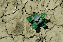 засуха Стоковая Фотография