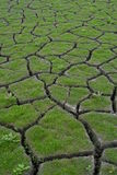 засуха 2 Стоковая Фотография