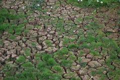засуха Стоковые Фотографии RF