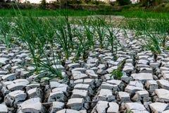 Засушливая область Стоковые Фото