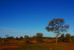 Засушливая центральная Австралия Стоковая Фотография