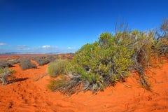 Засушливый ландшафт Аризоны Стоковые Фото