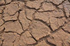 Засушливый Стоковые Фото