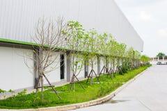 Засыхание дерева в саде на лете Стоковые Фото