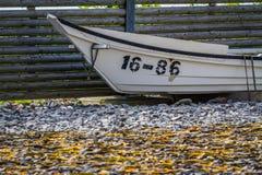 Засыхание келпа с рыбацкой лодкой стоковое фото