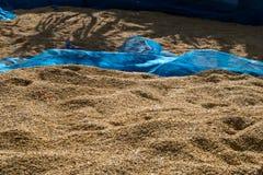 Засыхание неочищенных рисов Стоковые Фотографии RF