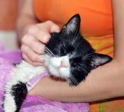 Засыхание домашней кошки Стоковая Фотография