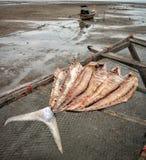 Koh Libong, Таиланд стоковое изображение