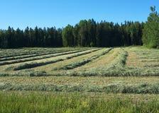 Засыхание сена Стоковая Фотография RF