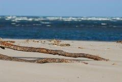 Затаите пляж Caleri около конематки Ровига Италии Rosolina Стоковая Фотография RF