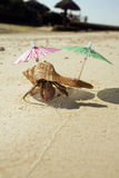 затворница рака бомжа пляжа Стоковая Фотография