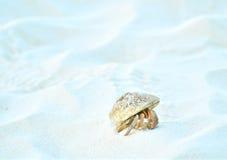 затворница рака пляжа Стоковое Изображение RF