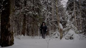 Затворница человека через снежный лес с trekking поляками в зиме акции видеоматериалы