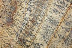 Затейливые похожие на папоротник маркировки на песчанике Стоковые Фотографии RF