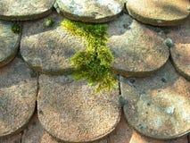 Затеняемая крыша старого potsherd Стоковые Изображения