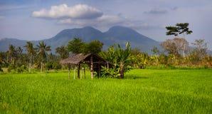 Затеняемый дом остатков в азиатском поле риса стоковое фото