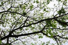 Затеняйте ветвь и лист дерева красивые в взгляде предпосылки леса нижнем стоп дня мировой окружающей среды концепции разрушает дл стоковое фото