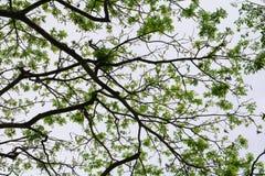 Затеняйте ветвь и лист дерева красивые в взгляде предпосылки леса нижнем стоп дня мировой окружающей среды концепции разрушает дл стоковая фотография