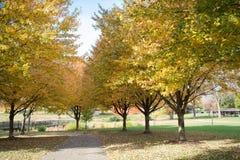Затишье и мирное внешнее Какой красивый цвет осени Стоковое Фото