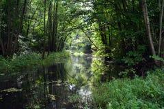Затишье реки Стоковые Фото