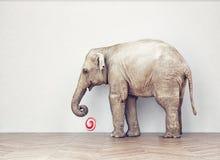 Затишье слона стоковые изображения