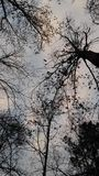 Затмленный взгляд Стоковые Фото