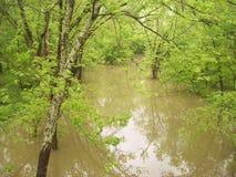 затопленная заводь Стоковая Фотография