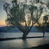 Затопленное озеро с силуэтами дерева и небом захода солнца Стоковая Фотография
