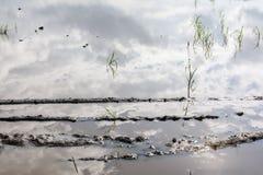 Затопленное поле картошки стоковое изображение