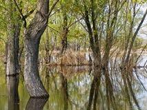 затопленные валы Стоковое Фото