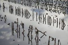 Затопленные урожаи стоковое изображение