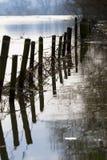 затопленный лужок Стоковые Фотографии RF