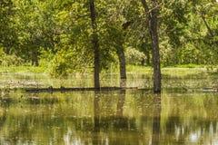 Затопленная заводь рыб Стоковые Изображения RF