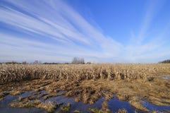 Затопленное поле земледелия стоковое изображение