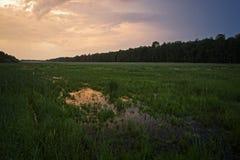 Затопленное поле Стоковые Изображения RF