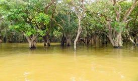 Затопленные деревья в Камбодже стоковое фото rf